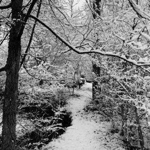Snow Tracery